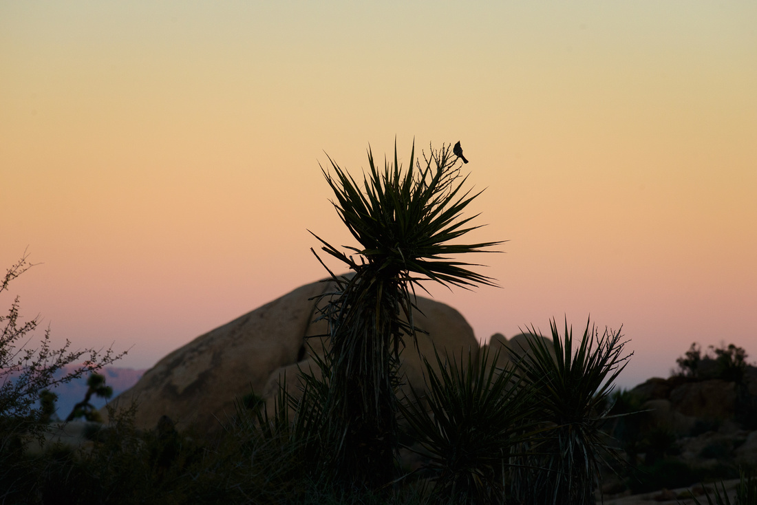 29 Palms - Joshua Tree